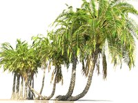 coconut palm pack 12 3D