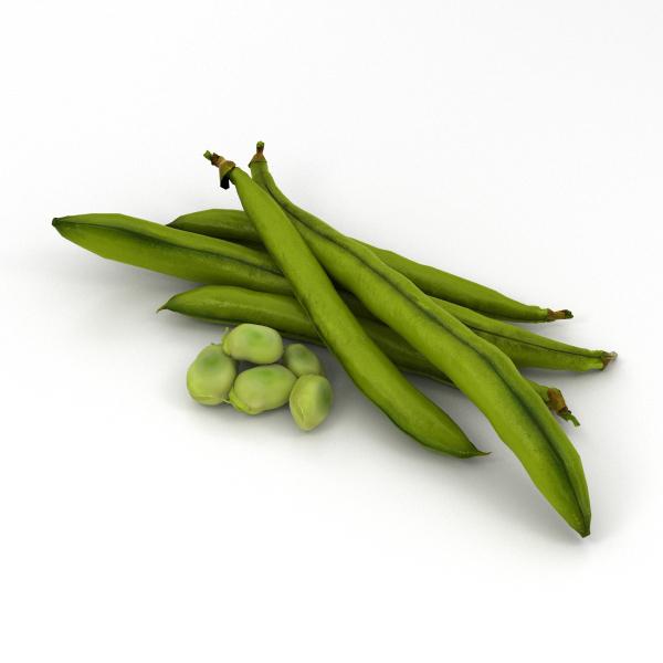 3D green bean model