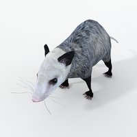 opossum 3D model