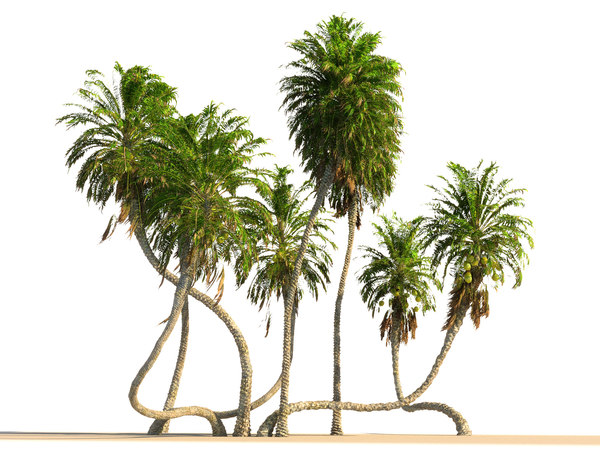 3D coconut palm pack 4