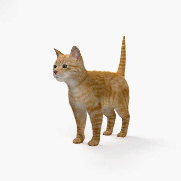 3D cat ginger model