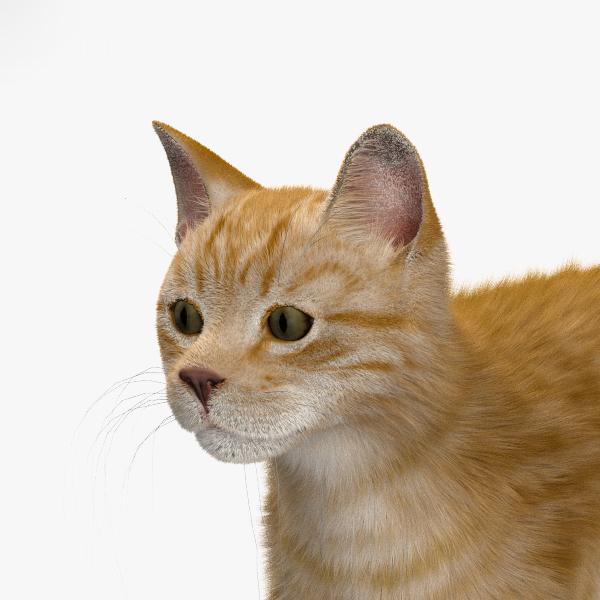 3D cat ginger model