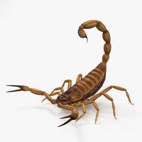 3D model scorpion scorpio