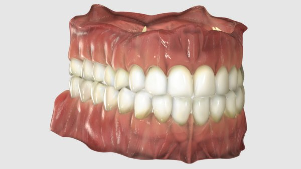 gums realistic teeth 3D model