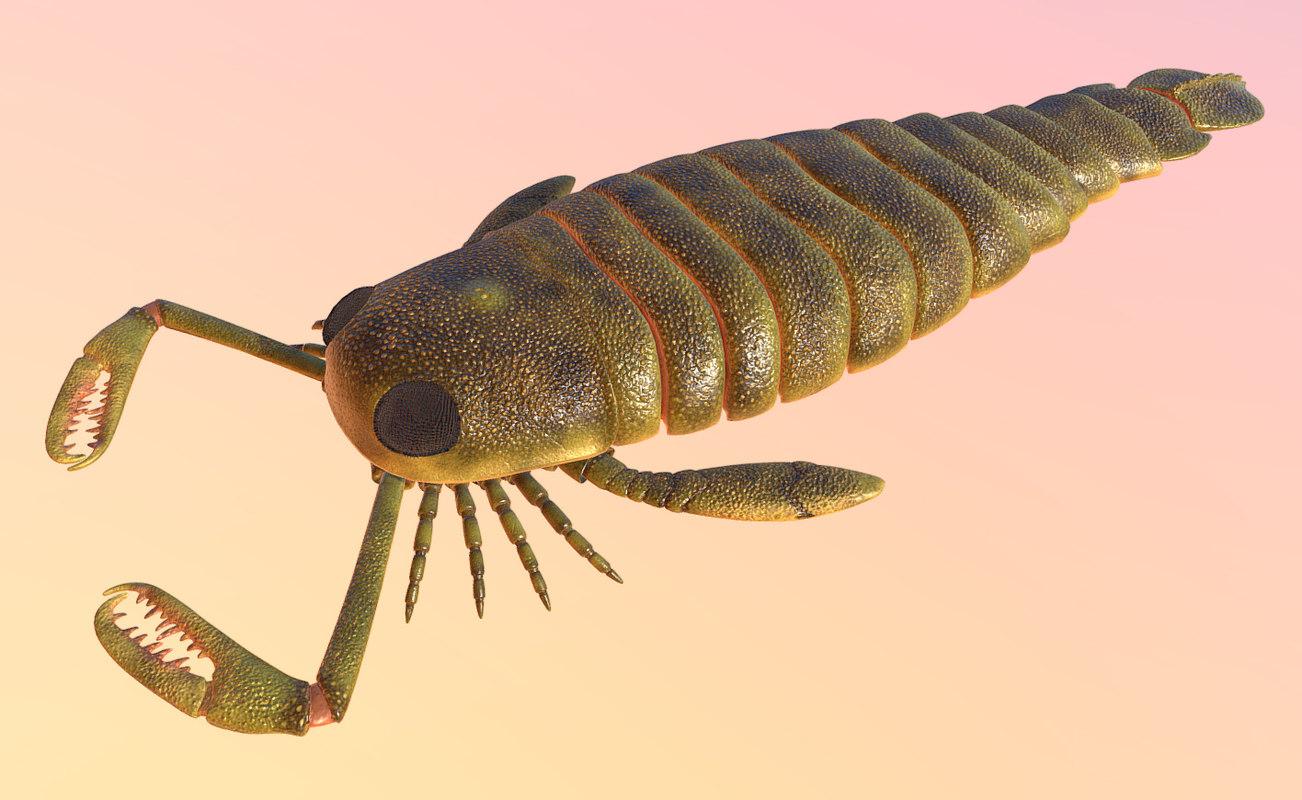 pterygotus 3D model