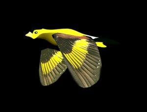 birds flight c4d