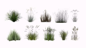 grass plant model