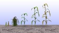 Maize set lowpoly