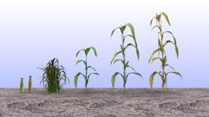 maize corn plant set 3D model