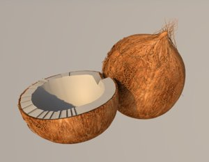 3D coconut model