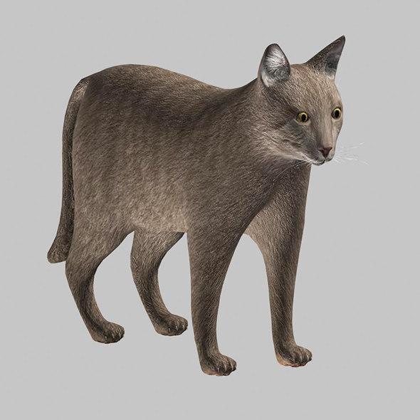 gray cat modeled 3D