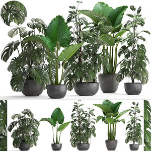 home plants exotic monstera 3D model