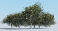 realistic fruit tree woods model