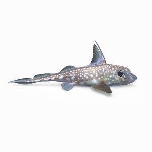 3D spotted ratfish model