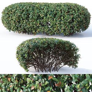 cotoneaster hedge 3D model