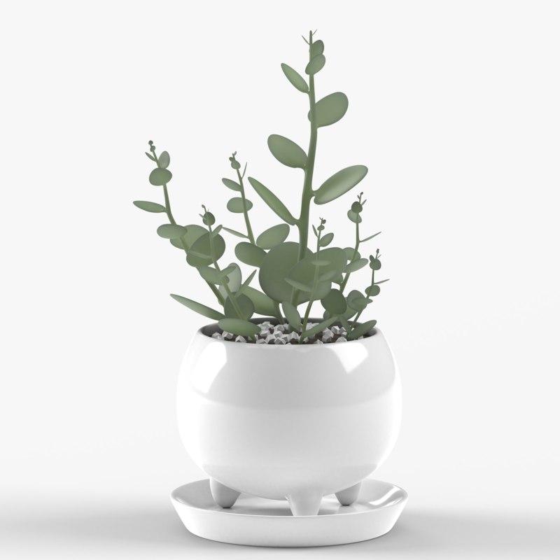 3D xerosicyos danguyi plant pot