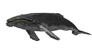 3D hump whale model