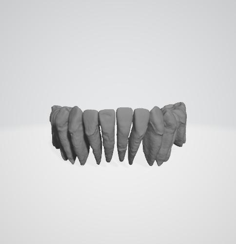 dental arch 3D model