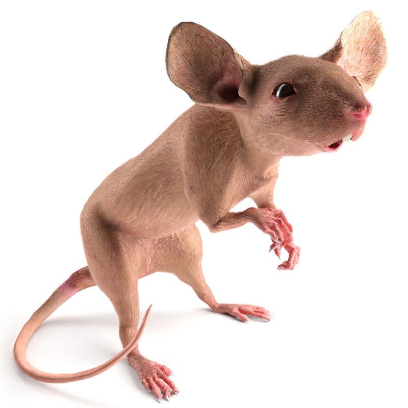 fancy mouse 3D model