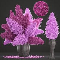 3D bouquet lilac syringa