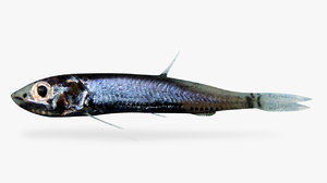 panama lightfish 3D model