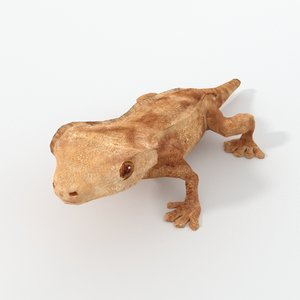 crested gecko 3D model