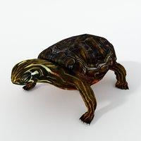 3D oriental painted turtle