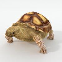 3D sulcata turtle model