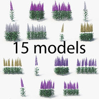 digitalis flowers 3D model