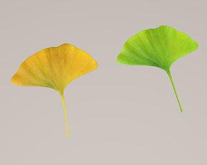 ginkgo plants trees 3D model