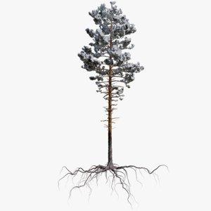3D winter pine tree 1