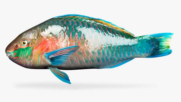 parrot fish 3D model
