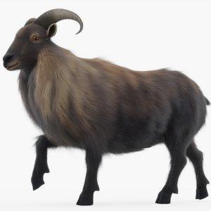 3D goat mountain model