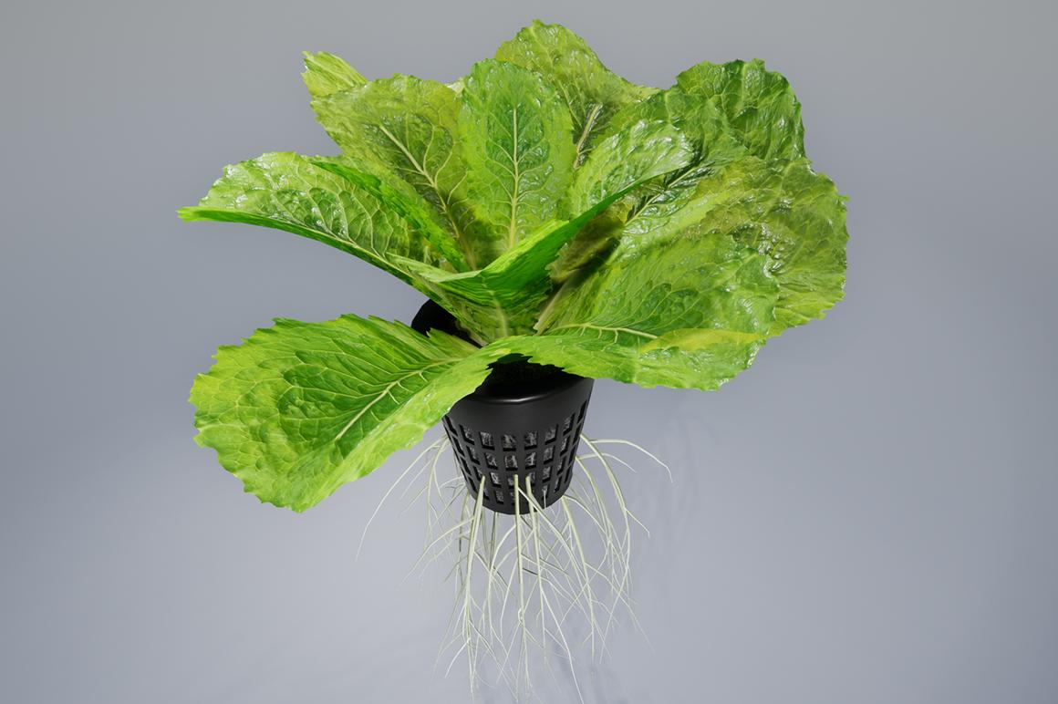 3D lettuce pot model