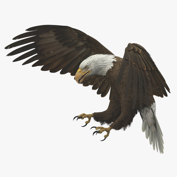 3D american bald eagle animations