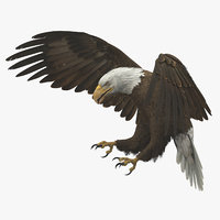 American Bald Eagle Animated