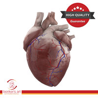 3D human heart ready games model
