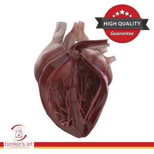3D dissected human heart model