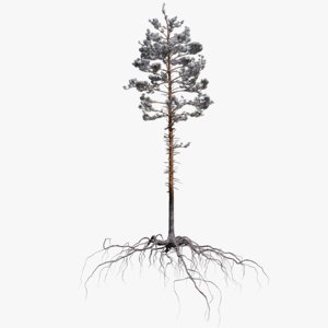 winter pine tree 3 3D model