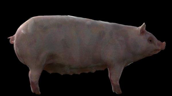 farm pig 3D model