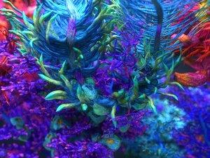 plants ocean - alien 3D model