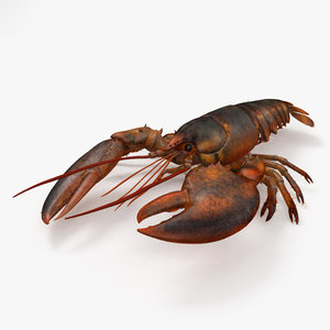 3D lobster crustaceans model