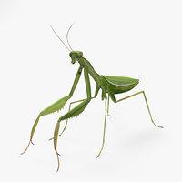 3D mantis mantodea insect