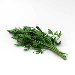 3D parsley food
