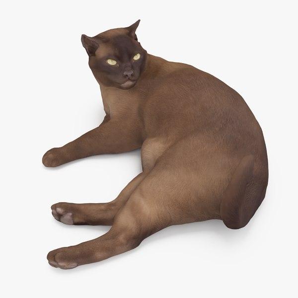 3D cat abyssinian model
