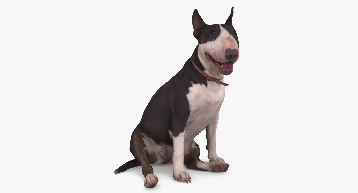 3D dog bull terrier