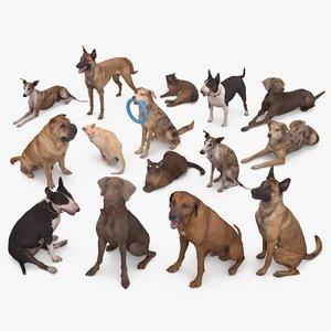 animals dog cat 3D