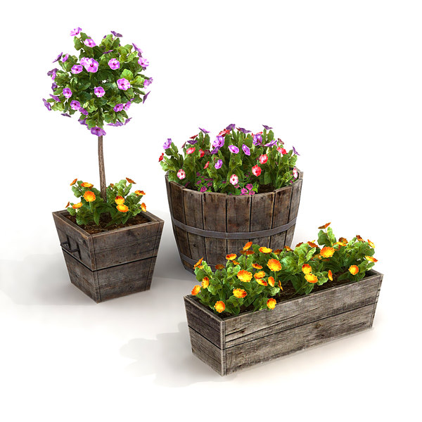plants potted max