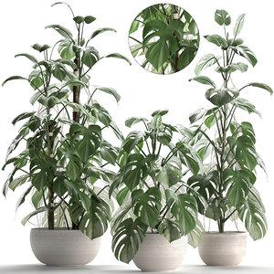 3D monstera plants exotic model