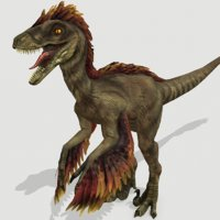 3D feathered raptor dinosaurs